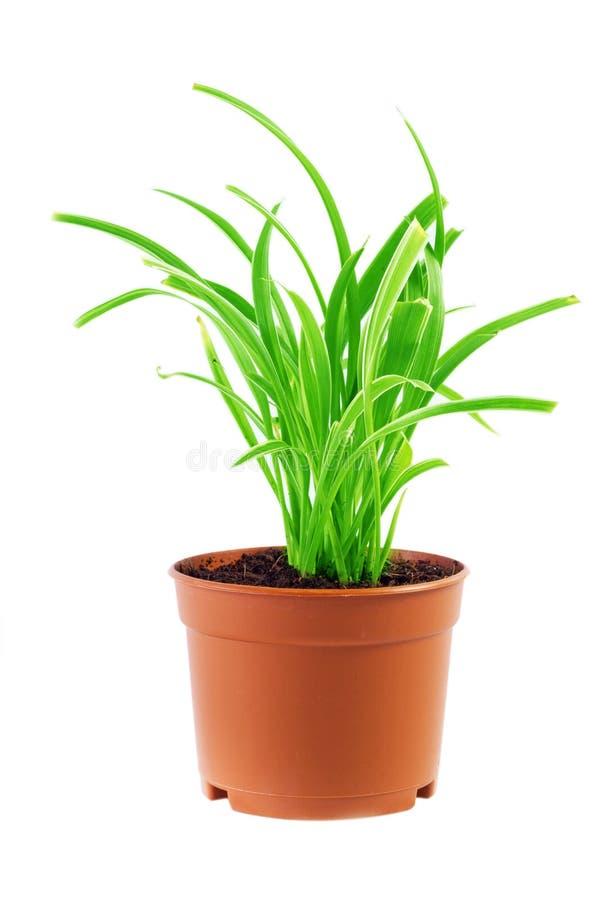 plante verte dans un pot image stock image du sable 38133377. Black Bedroom Furniture Sets. Home Design Ideas