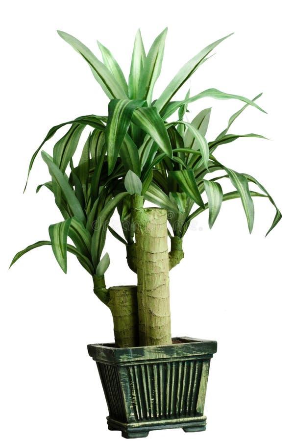 plante verte de chambre photo stock image du affichage 4660758. Black Bedroom Furniture Sets. Home Design Ideas