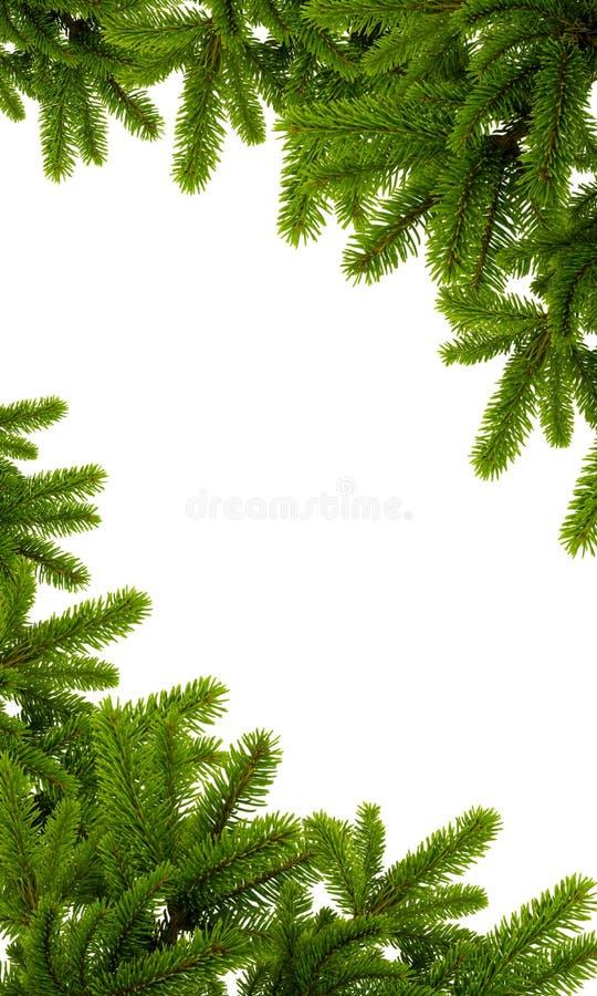 Plante verte de Noël photo stock
