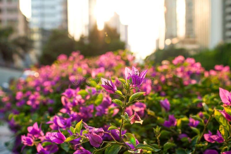 Plante verte de ville photographie stock