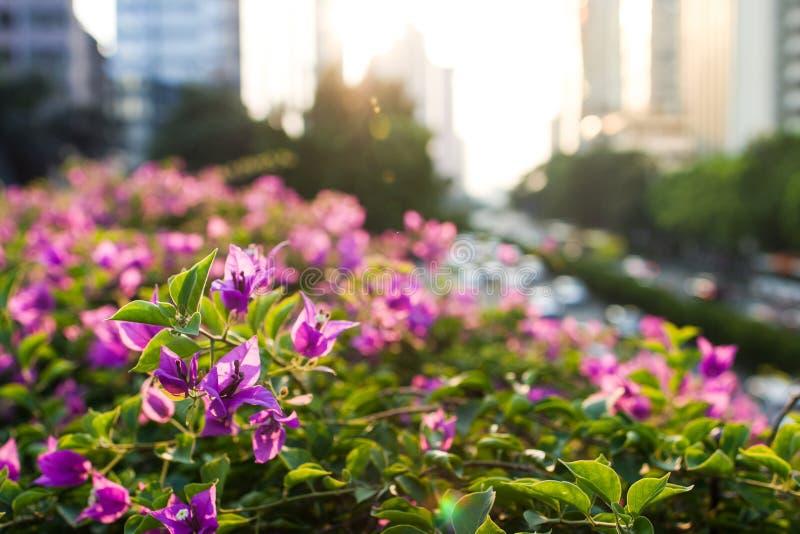 Plante verte de ville photos libres de droits