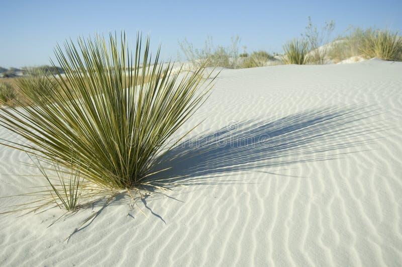 plante verte en dune de sable blanche image stock image