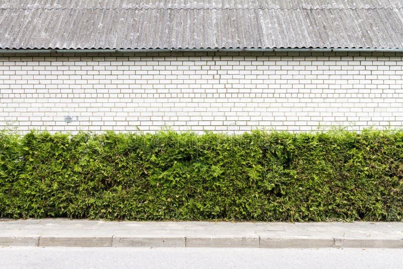 Plante verte et fond blanc de mur de briques image stock
