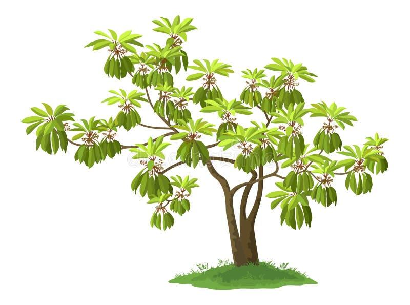 plante verte exotique