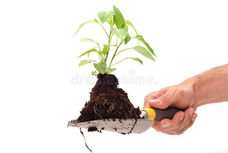 Plante verte pour un meilleur environnement image libre de droits