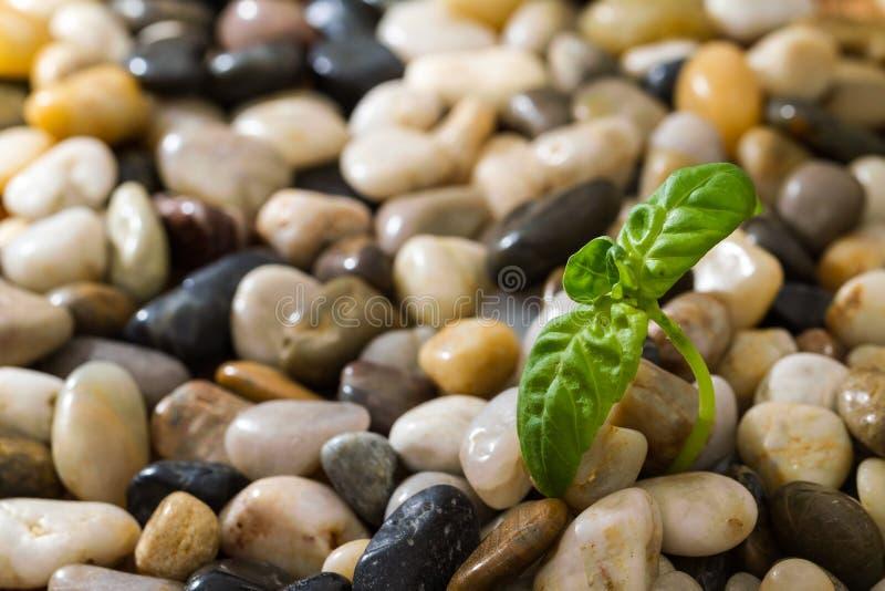 Plante verte s'élevant dans les pierres photos stock