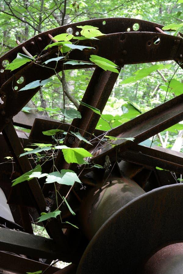 Plante verte sur la roue abandonnée de droite d'huile photo stock