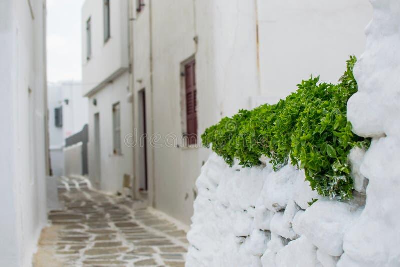 Plante verte sur la rue blanche images libres de droits