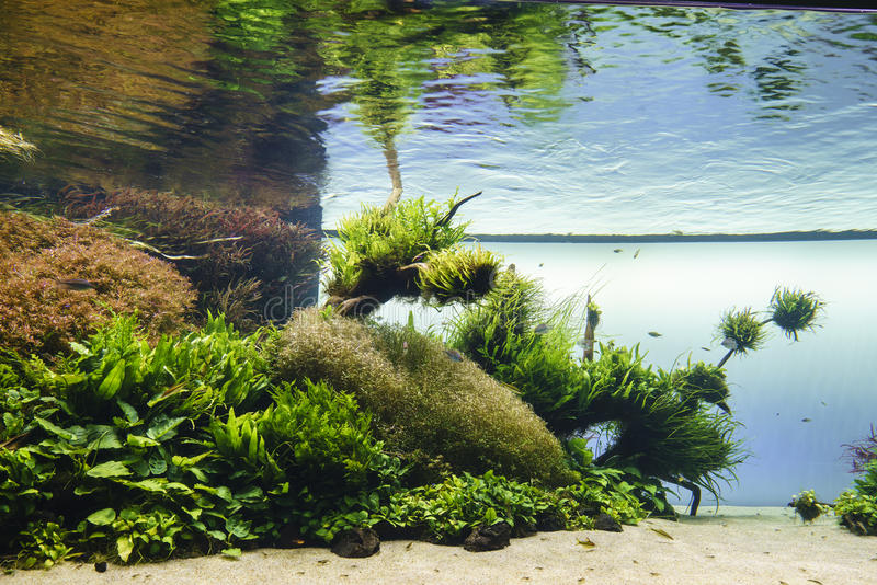 Planted aquarium stock image