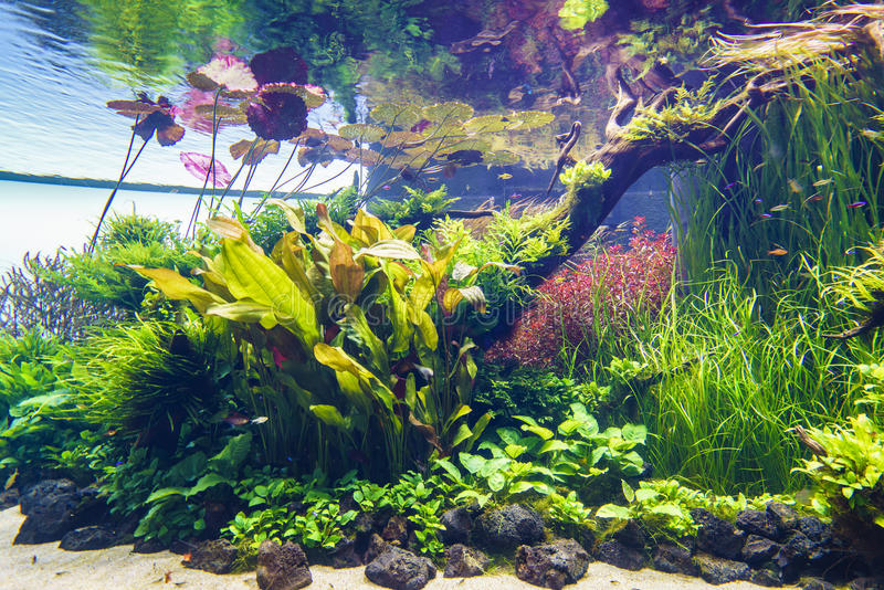 Planted aquarium royalty free stock photos