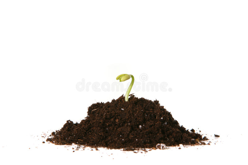 Planted Seed Sprouting Stock Image