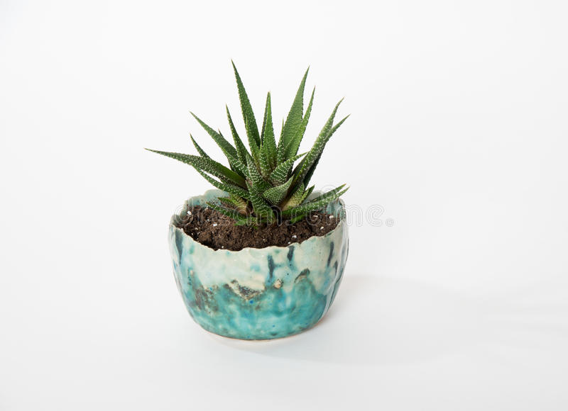 Planted succulent stock photo