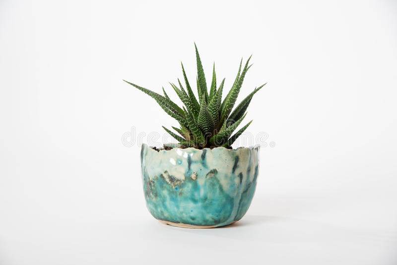 Planted succulent royalty free stock photography