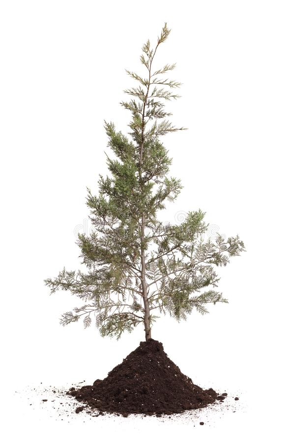 Free Planted Tree And Soil Royalty Free Stock Photo - 144583425
