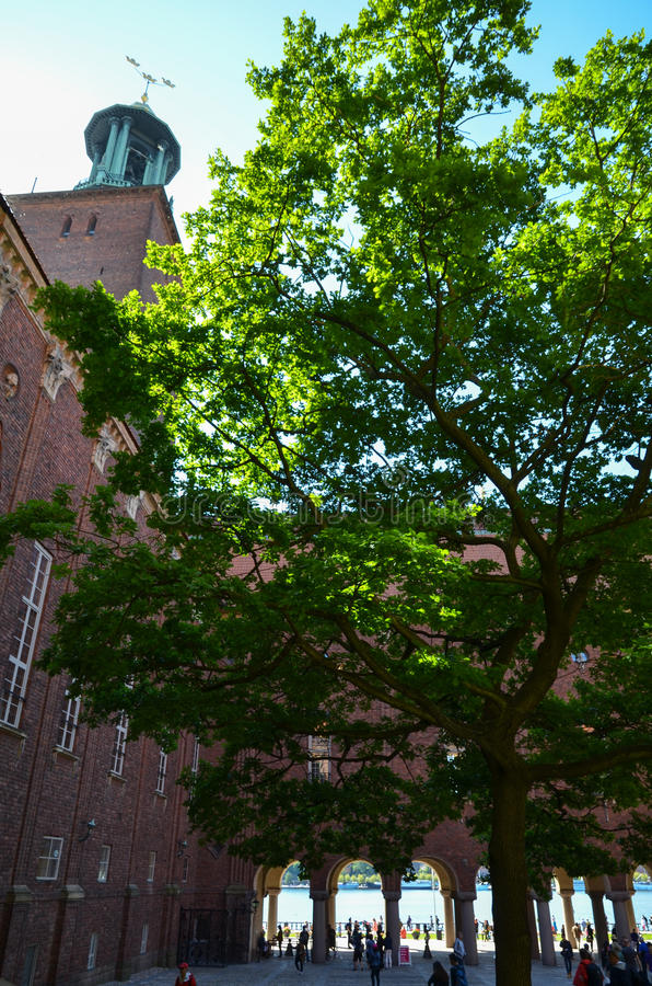 Planted tree by the City Hall in Stockholm royalty free stock photography