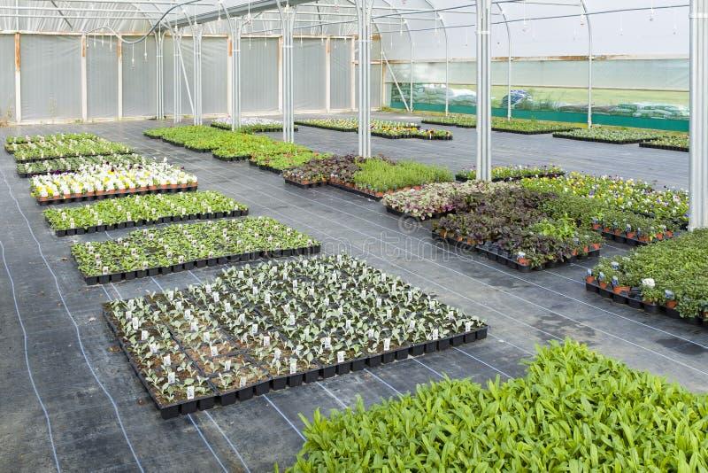 Planten die in kwekerijkassen groeien royalty-vrije stock afbeeldingen