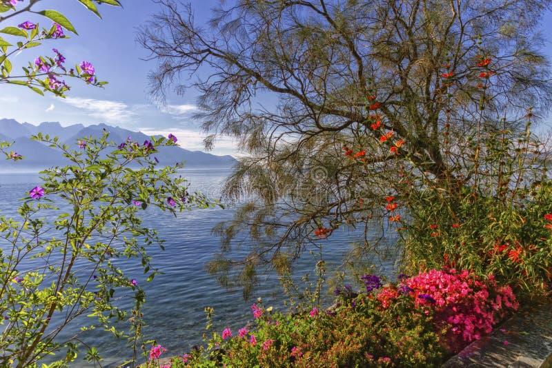 Planten en bloemen naast het meer van Genève Leman in Montreux, Zwitserland stock afbeelding