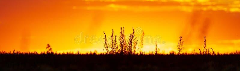 Planten in het veld bij zonsondergang stock foto