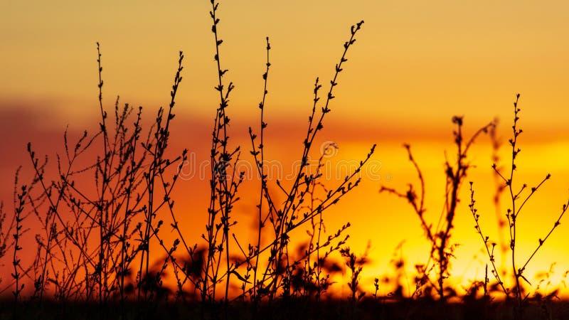Planten in het veld bij zonsondergang stock fotografie