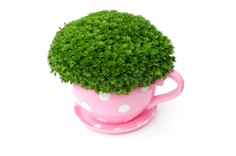 planter royaltyfria bilder