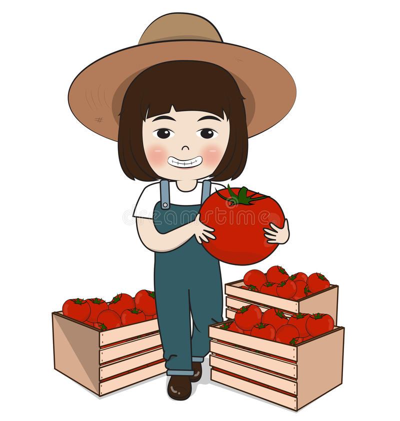 Planter harvest tomatoes. On white background stock illustration