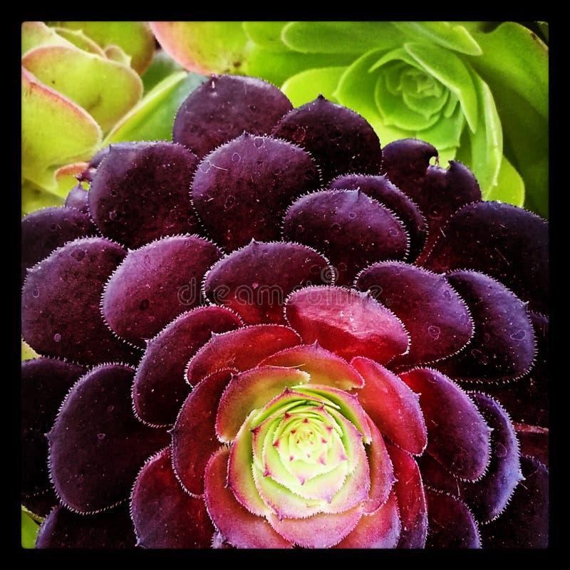 Planter van Kleurenpret stock afbeeldingen