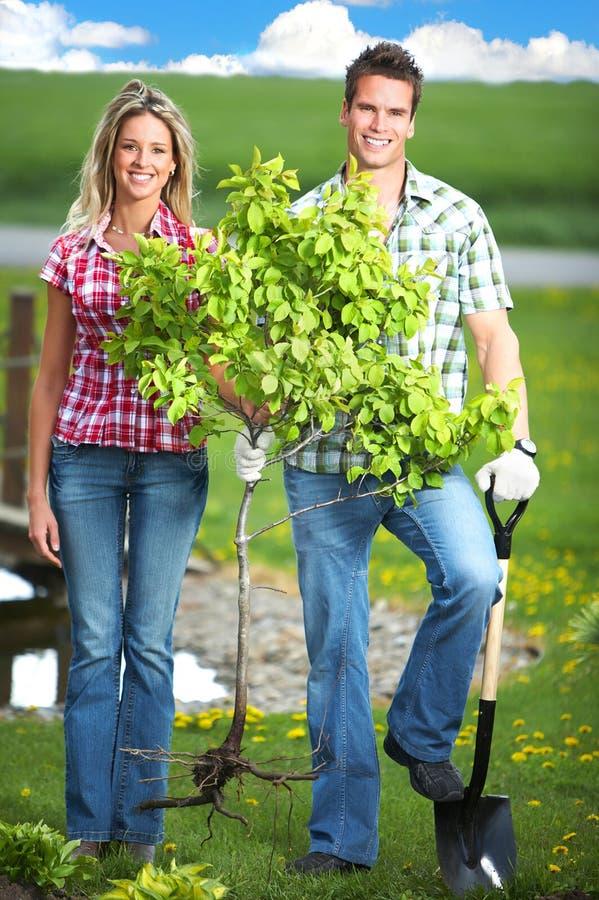 plantera arkivfoto