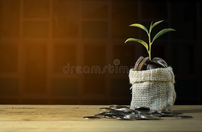 Plantera att växa på mynthögen uppvaktar på tabellen arkivfoton