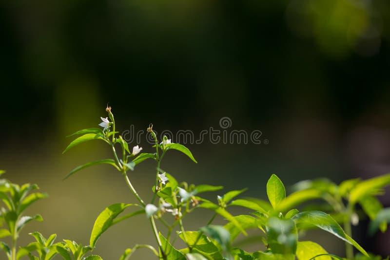 Plantera barnkammaren och den organiska grönsakträdgården för sunt äta Selektiv fokus på unga frodiga gräsplansidor vid organiskt royaltyfria foton