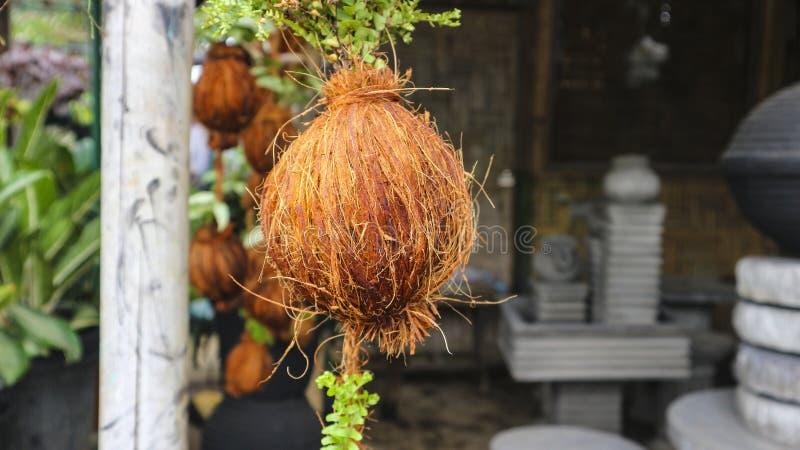 Plantera behållaren från kokosnötskal i trädgården arkivbilder