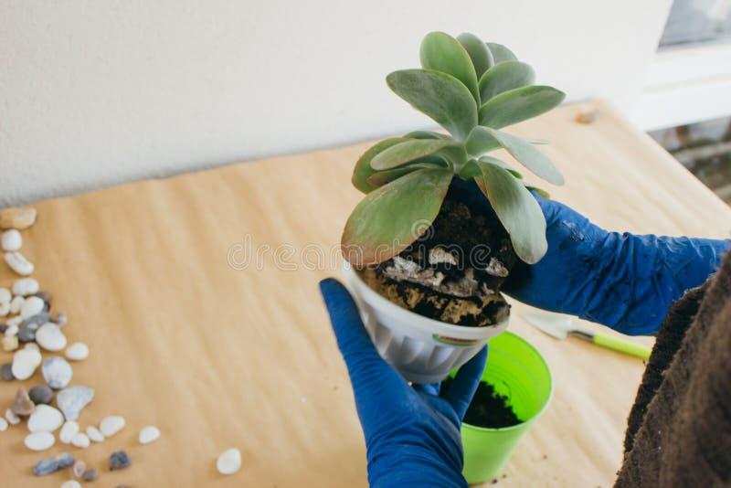 Plantera blomman i krukor arkivfoto