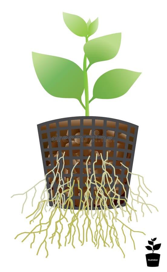 Plantera ett träd i en kruka Mjukt rotar med luft rotar Utbildning vektor illustrationer