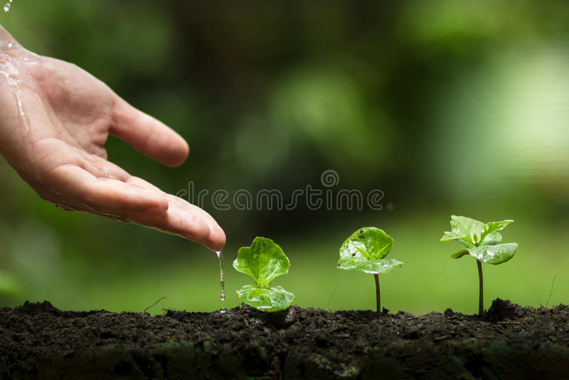 Plantera ett träd, skydda trädet, handhjälp trädet, det växande momentet som bevattnar ett träd, omsorgträdet, naturbakgrund fotografering för bildbyråer