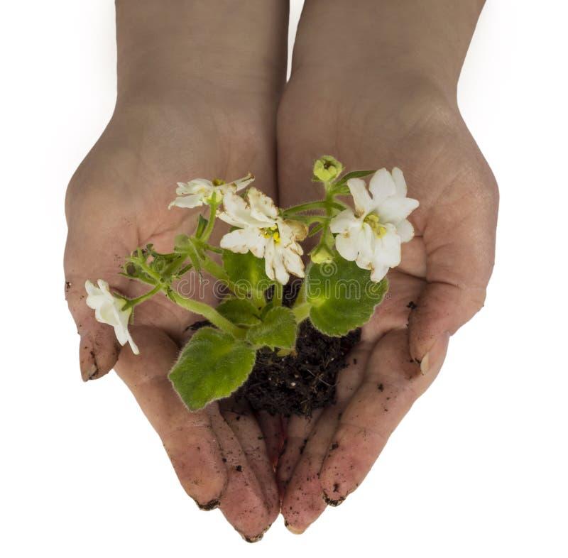 plantera för blomma royaltyfria bilder