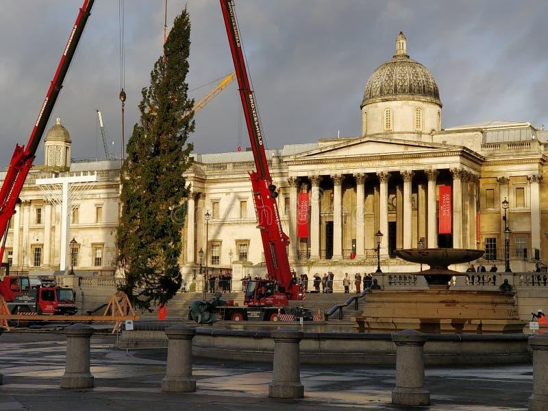 Plantera för Trafalgar julgran royaltyfri foto