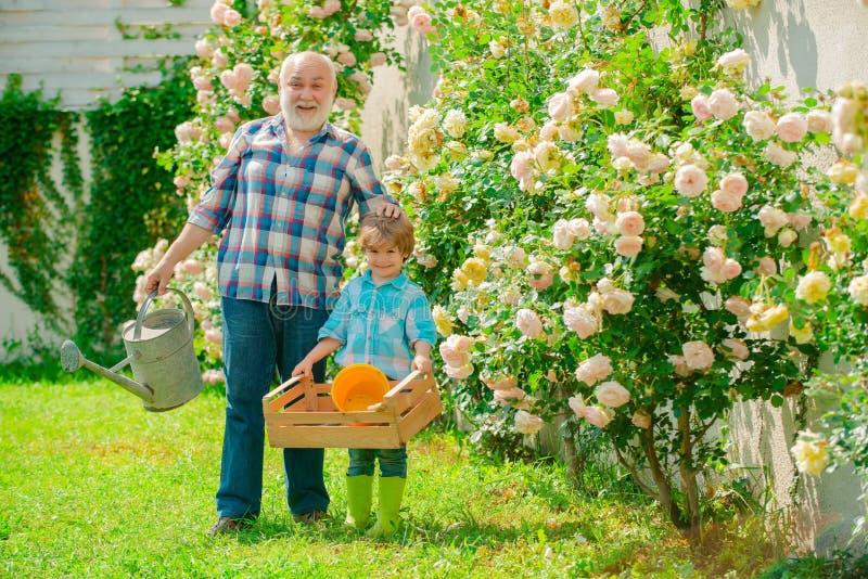 plantera f?r blommor Farfar och sonson i härlig trädgård En farfar och ett litet barn arbetar i blommor parkerar royaltyfri fotografi