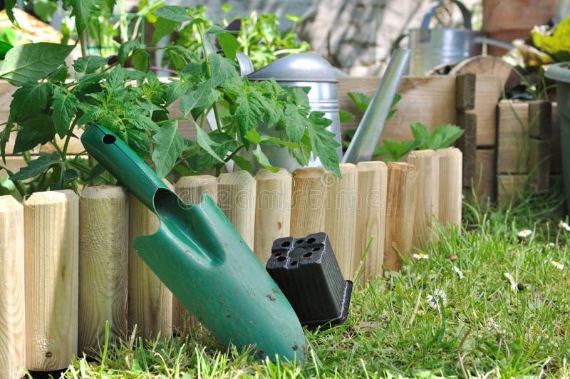 Plantera grönsaken i trädgård royaltyfri fotografi