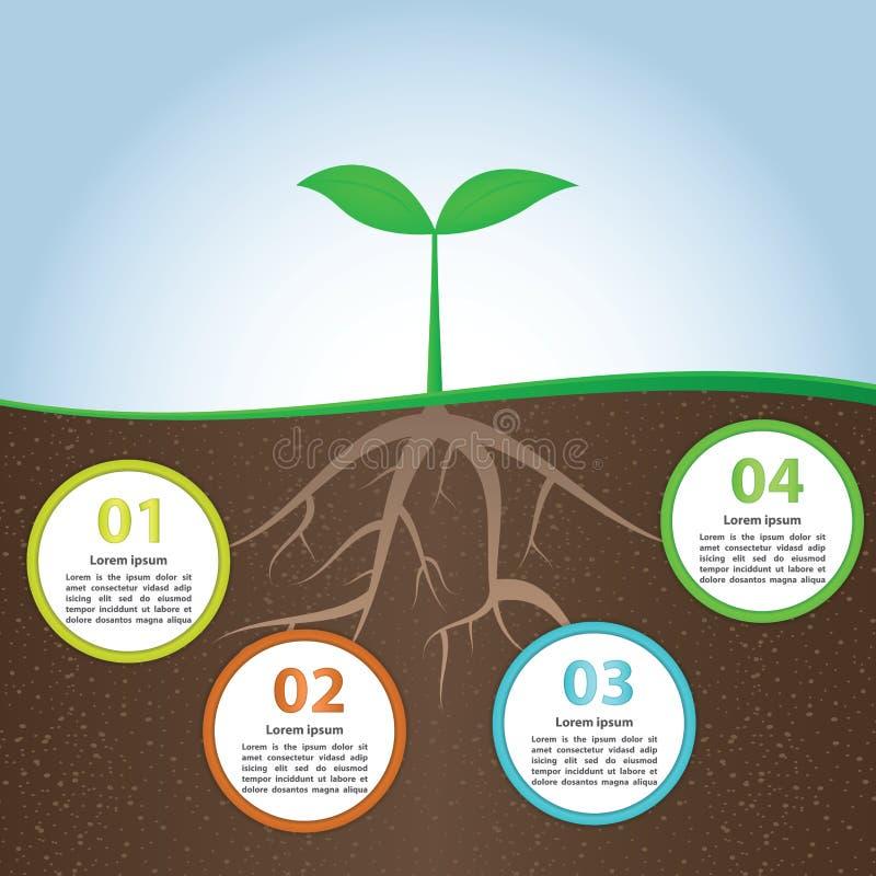Plantera och rota mallen för den Infographic bakgrundsdesignen stock illustrationer