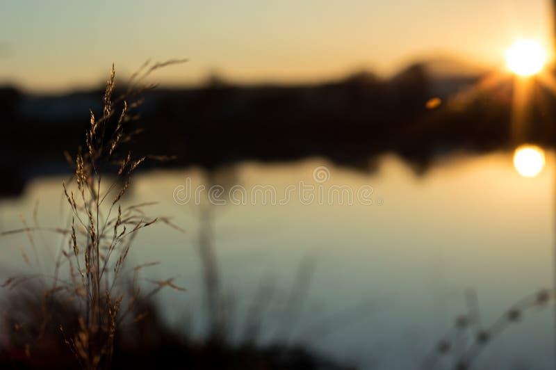 Plantera resningen från jordningen i en solnedgång royaltyfri bild