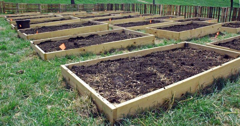 Plantera sängar i en gemenskapträdgård arkivfoton