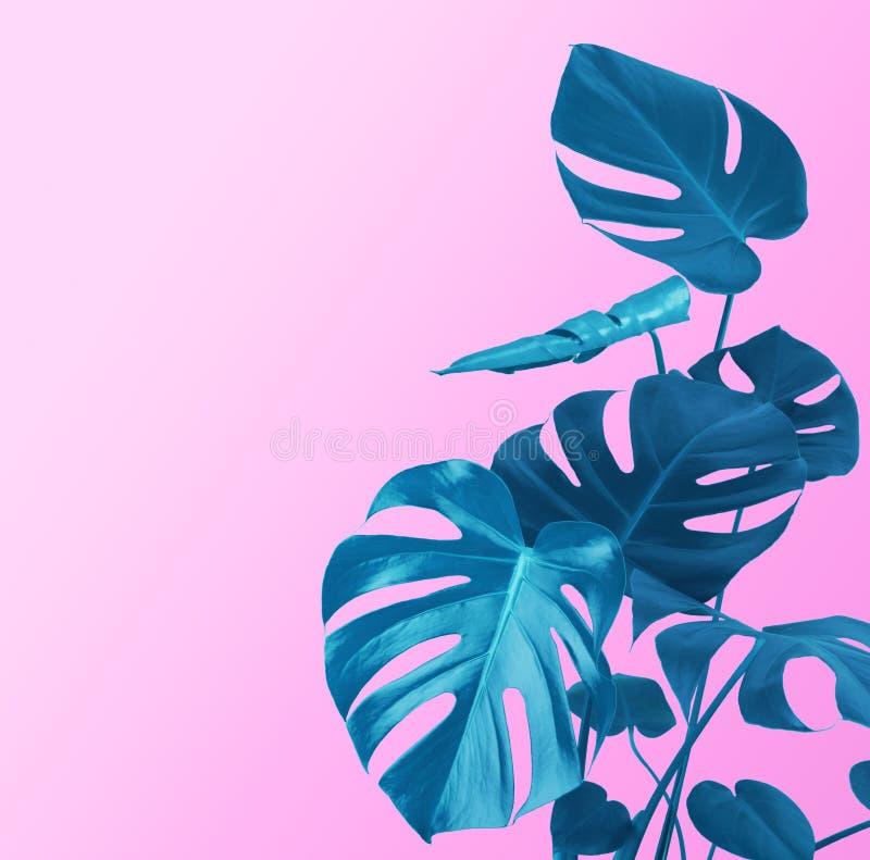 Plantera stammen, och sidor av blått färgar på purpurfärgad bakgrund royaltyfri foto