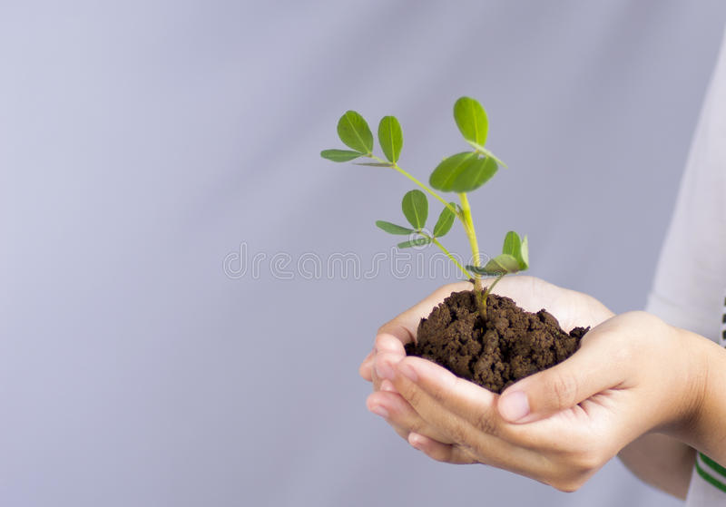 Plantera träd för jord royaltyfri bild