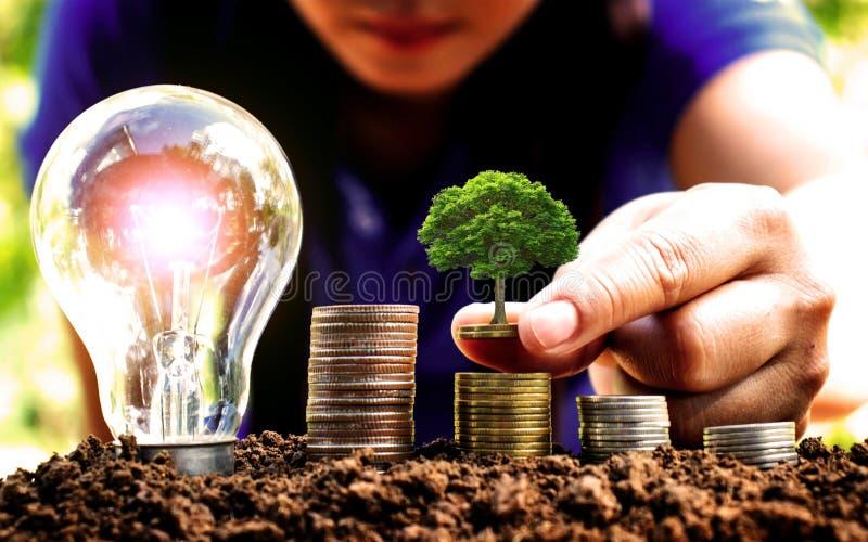 Plantera tr?d vid handen p? mynt bredvid lampan arkivfoto