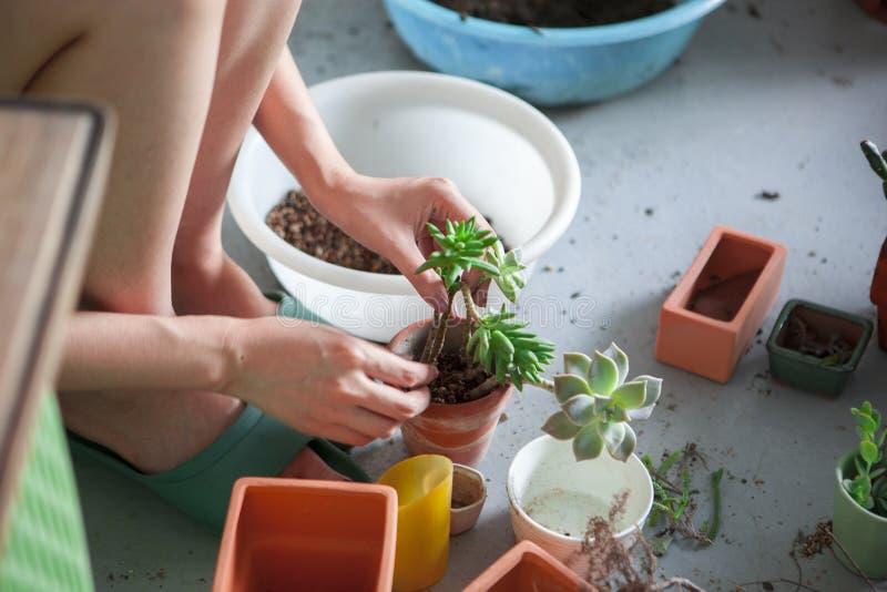 Planterad flowersï¼ Œgreenhouse, planterade suckulentlövverkväxter, arkivfoto