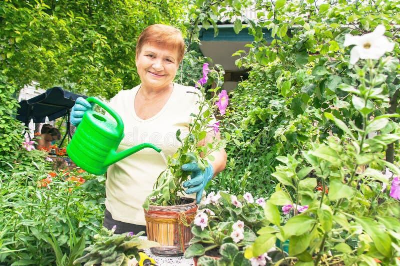 Planterar den aktiva höga äldre kvinnan för trädgårdsmästaren a arkivbild