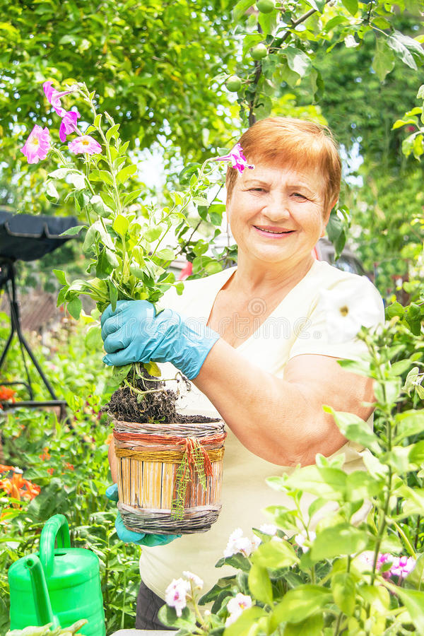 Planterar den aktiva höga äldre kvinnan för trädgårdsmästaren blommor i kruka royaltyfri fotografi