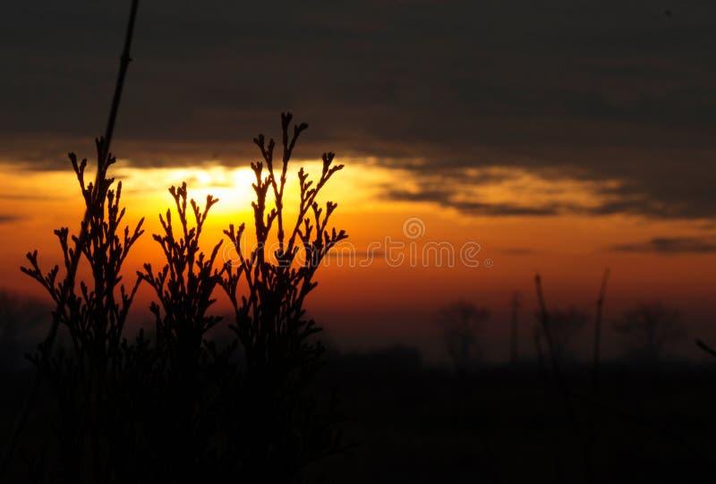 planterar solnedgång royaltyfri fotografi