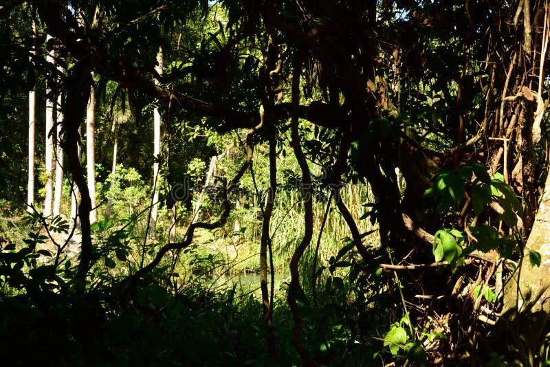 planterar tropiskt El Nicho ( Cienfuegos) , Kuba royaltyfri foto