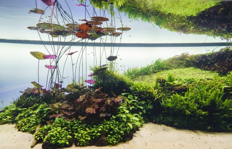Planterat akvarium fotografering för bildbyråer