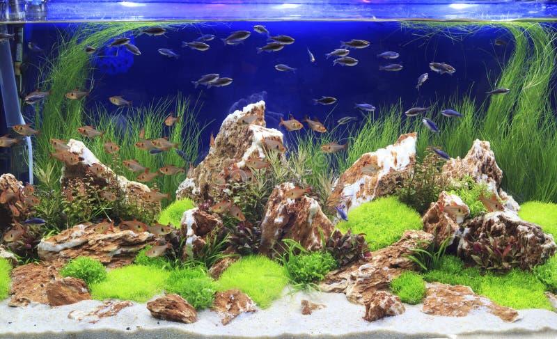 Planterat sötvattens- akvarium arkivfoto
